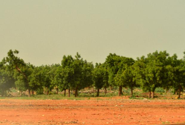 Criminalité urbaine à Niamey : La ceinture verte, un sanctuaire des malfrats !