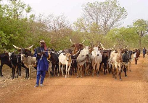 """Résultat de recherche d'images pour """"pastoral nigerdiaspora"""""""